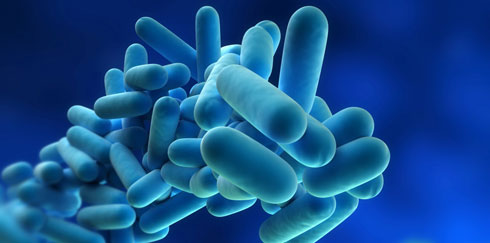 Pesquisa da presença da bactéria Legionella